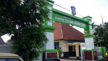 Pemotongan Hewan Kurban di RPH Surabaya Menyesuaikan SE Wali Kota